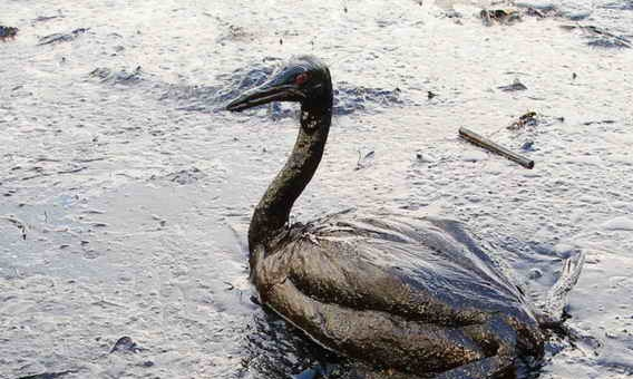 The Tar Beaches Of Tailings Pond-Poems fae Paisley
