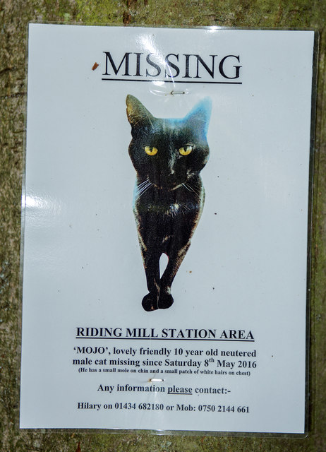 Missing Cats, The Real Story