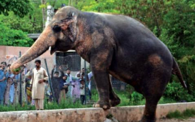 33 BABIES #SRILANKA IS LEGALISING #ELEPHANTTRAFFICKING! STOP THEM! #33babies #truthwillfindaway