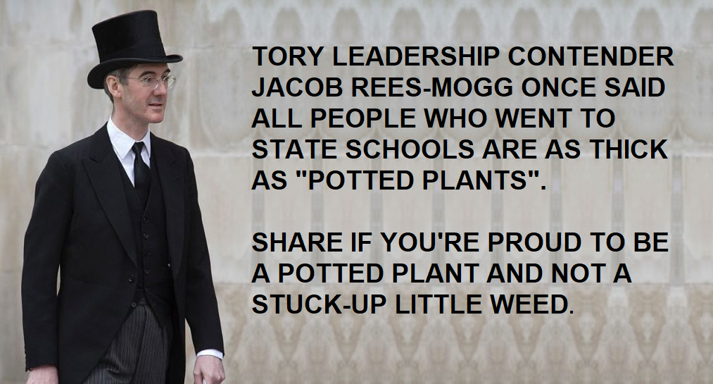 """Jacob Rees Mogg calls people who went to state school """"potted plants"""""""