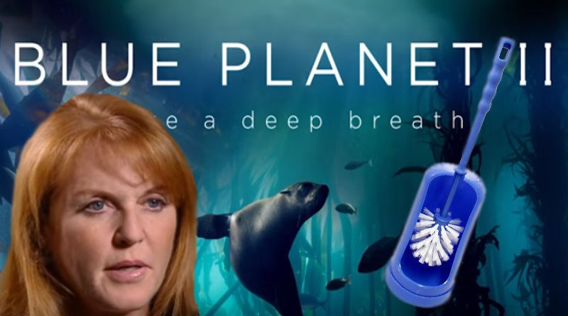 Storm as BBC insider reveals that The Blue Planet was filmed down Fergie's massive toilet