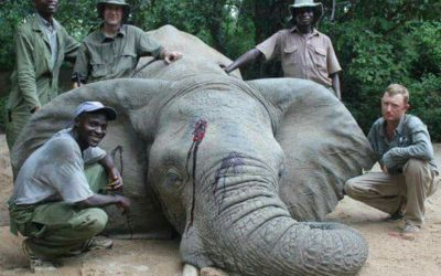 "THREE PAID ""GUIDES"" POSE NEXT TO THEIR  MURDER VICTIM, A GENTLE, ENDANGERED ELEPHANT"