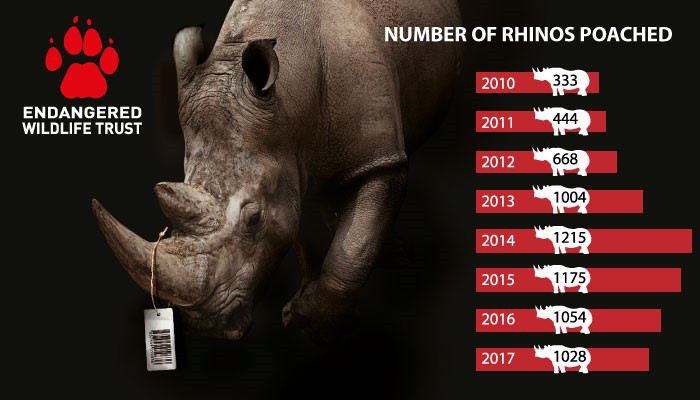 The Endangered Wildlife Trust responds to the latest report on rhino poaching figures